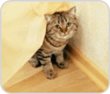 Cat hiding under sheet