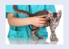 Cat being examined by vet