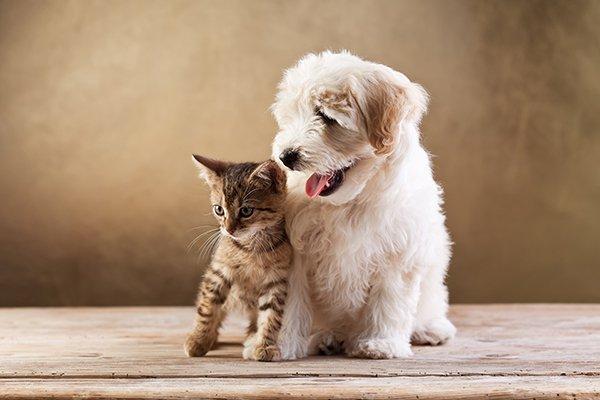 un cagnolino color beige e un gattino nero e marrone