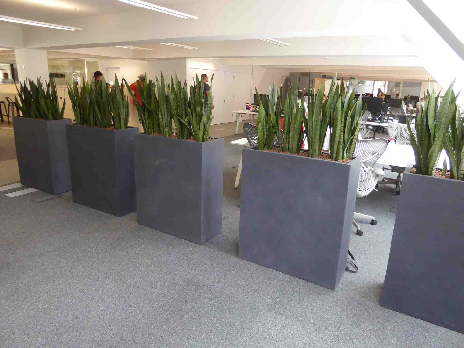 Superieur Indoor Plants Across London U0026 UK