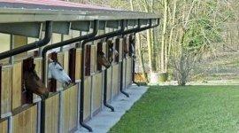Centro Ippico Il Roncolino, Viggiù (VA), pensione cavalli