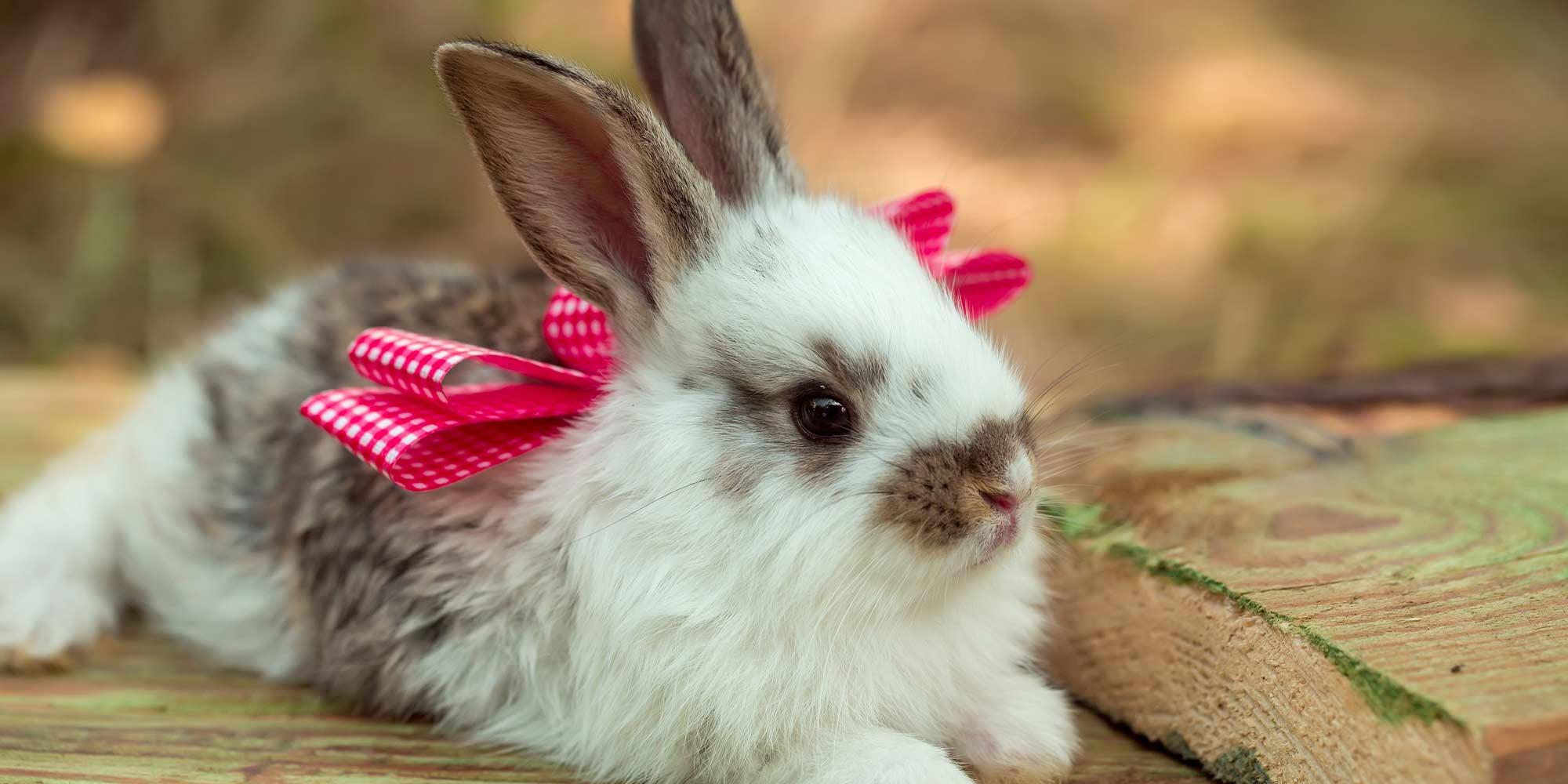 Coniglio bello e dolce a Stezzano