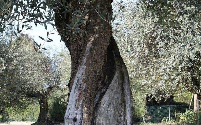 Vivaio alberi