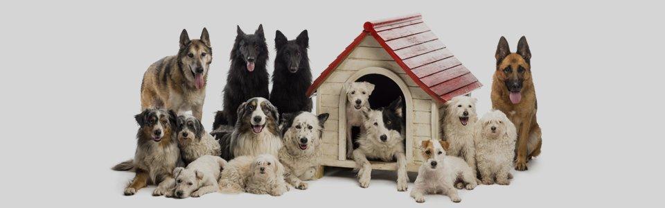 Dog re-homing in Preston
