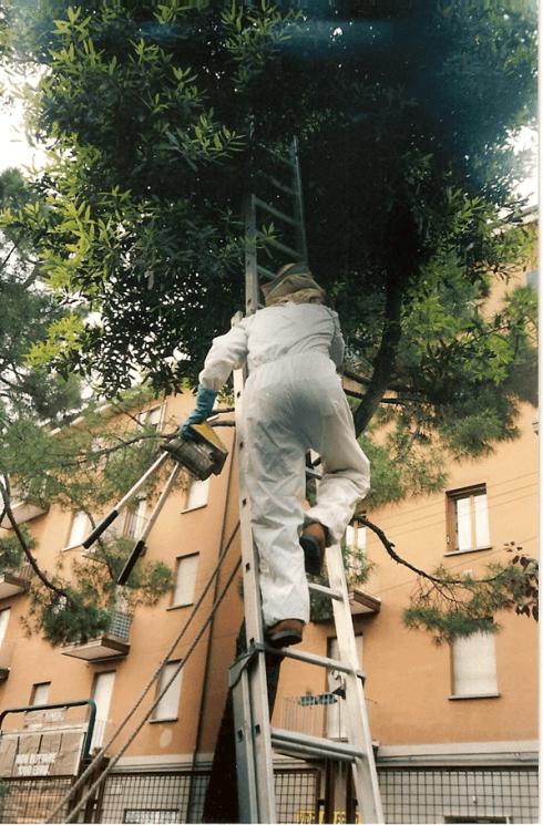 rimozione nidi di insetti ed uccelli