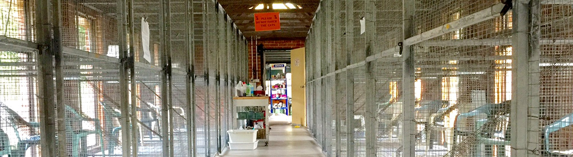 Cages for cat at Glenhaven Boarding