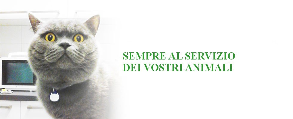 ambulatorio veterinario dottor Testa Fabio