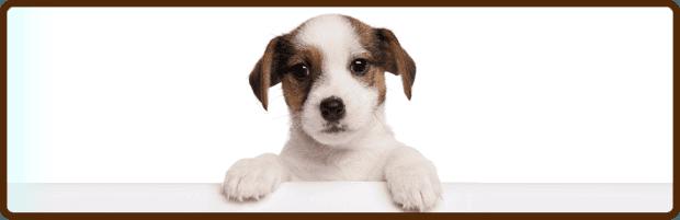 James Wellbeloved Diabetic Dog Food