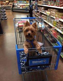 Yorkie trait of alert expression in cart