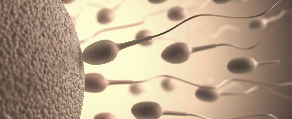 Spermatozooi