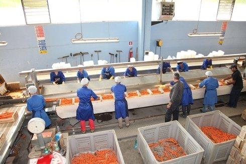 pesa carote