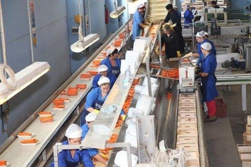 operaie industria di carote