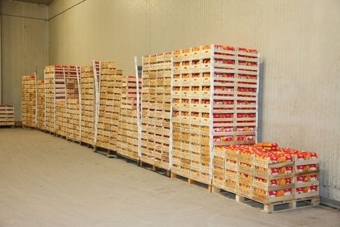 carote da esportazione