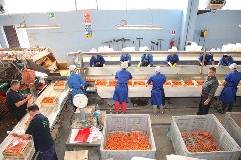 smistamento carote