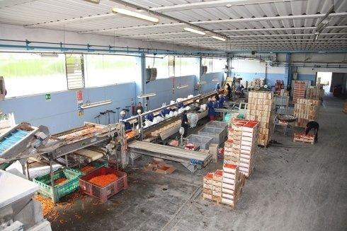 industria di carote