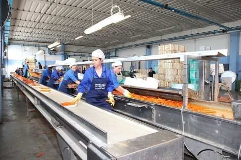 suddivisione carote in confezioni