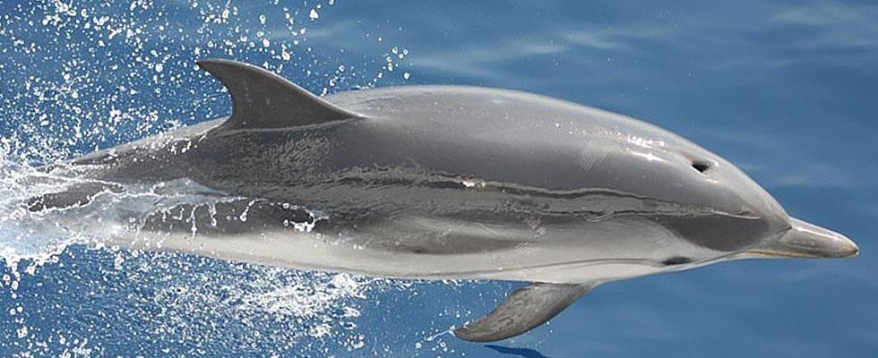 escursioni cetacei
