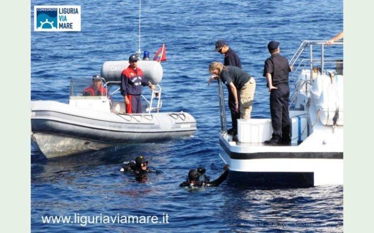 Turtle migration by sea Liguria
