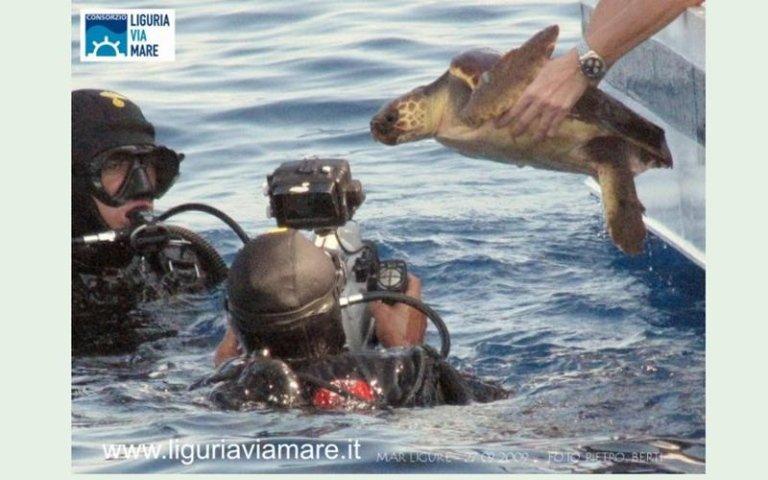 Turtle migration by sea Cinque Terre