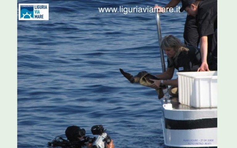Turtle Migration Liguria