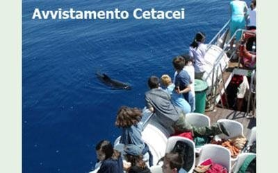 whale watching liguria