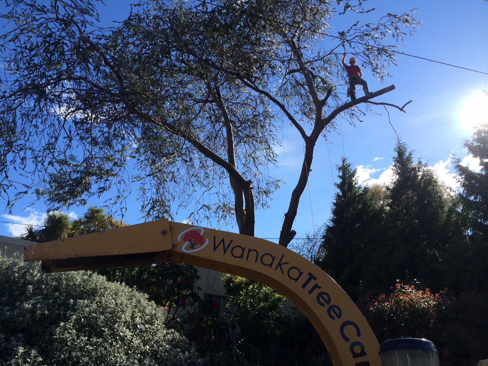 Providing tree care and tree removal services in Queenstown Lakes district