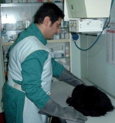 Il Dott. Piacenza e il piccolo cane