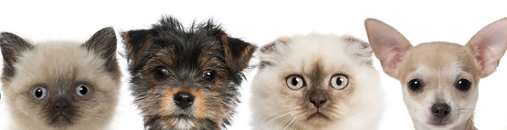 Caring pet groomer in Hamilton, OH with a terrier