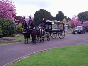 carriage-driving-northampton-clayton-carriage-masters-horse-carriage
