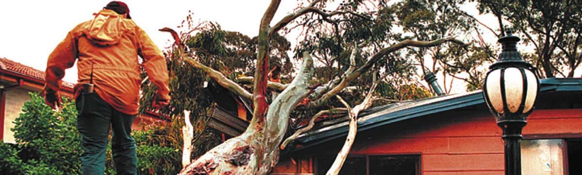 Tree Services for Brisbane