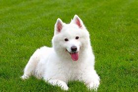 Mutleys Dog Grooming Bromley