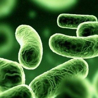 micologia, parassitologia