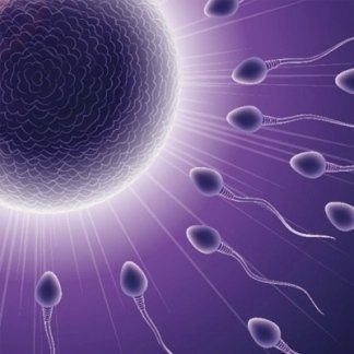 fertilità, testosteroide