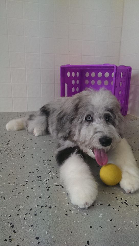 dog day care Apex, NC