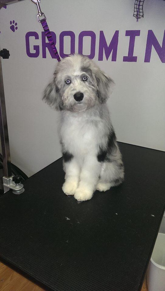 dog grooming Cary, NC