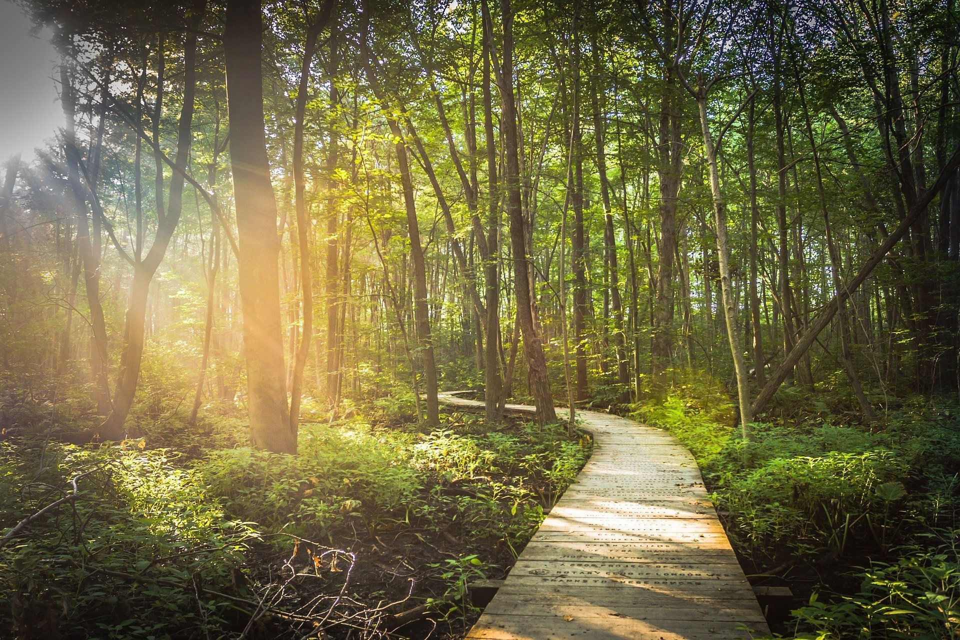 how to plan a cremation forest path