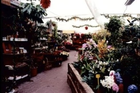 vendita piante da interno