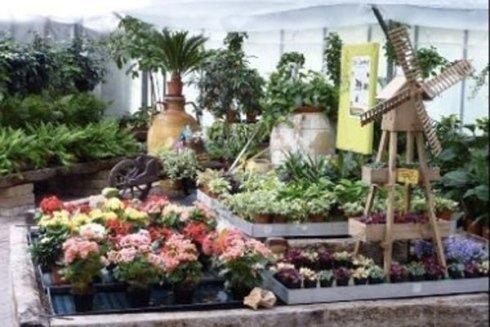 vendita piante stagionali