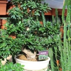 articoli per bonsai