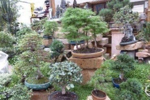 vendita bonsai