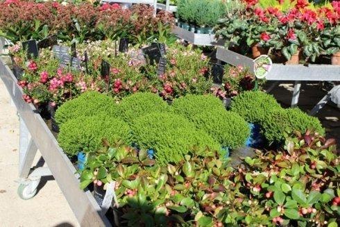 vendita piante grasse