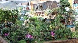 produzione bonsai