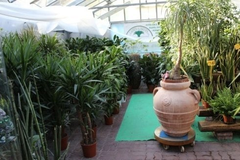 piante decorative