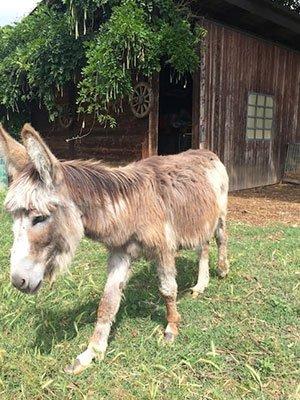 un mulo nel prato