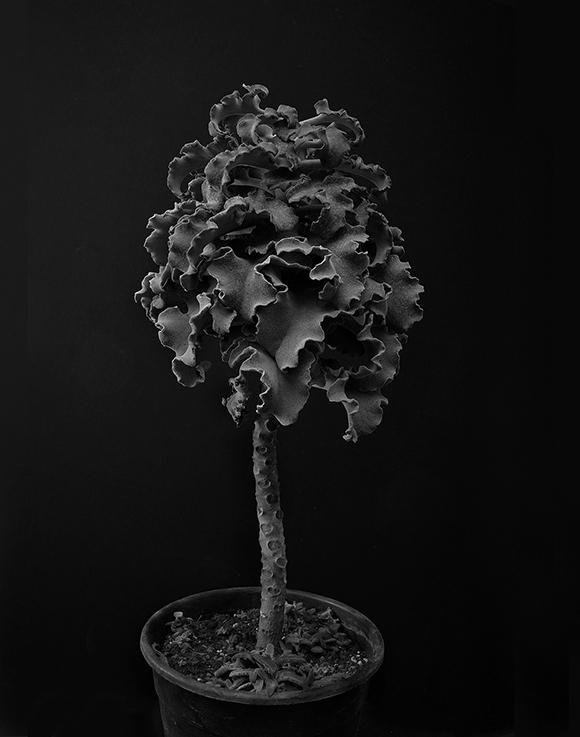 Plant portrait #1