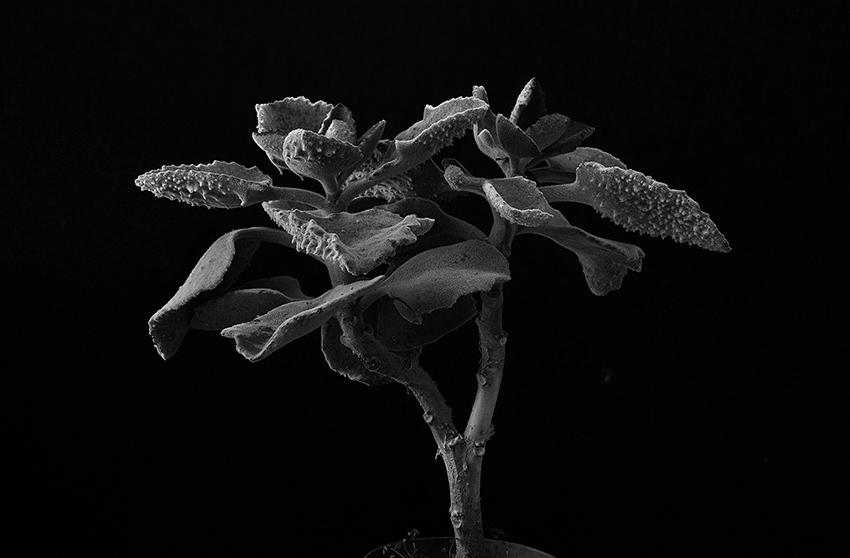 Plant portrait #2