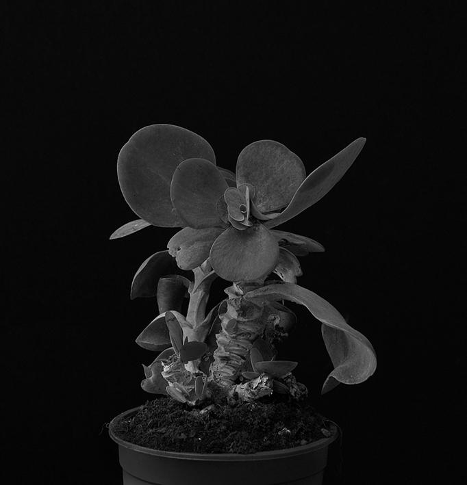 Plant portrait #4