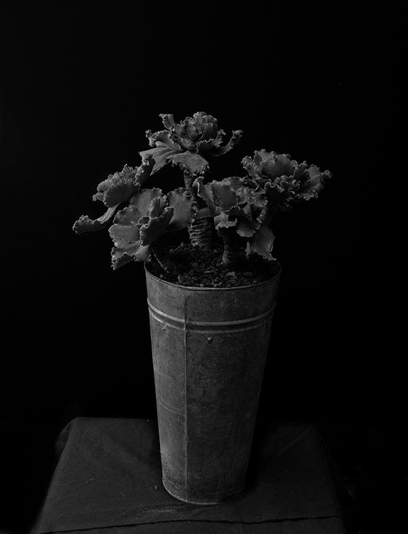 Plant portrait #5