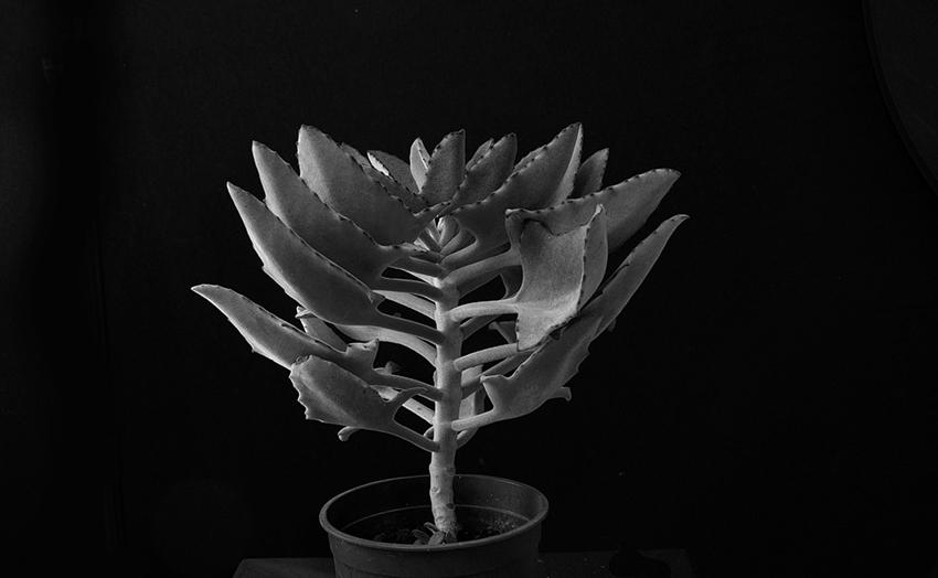 Plant portrait #7