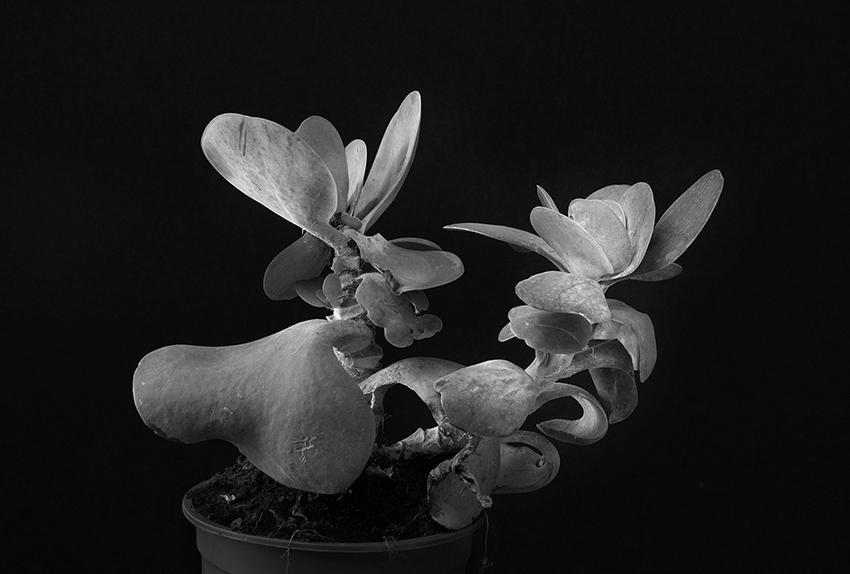 Plant portrait #8